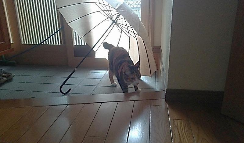 タナカの徒然日記~愛猫に思ふこと~