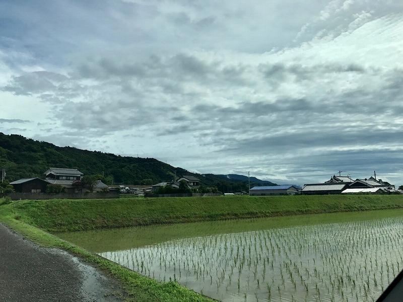 山草先生~SHINSEI 苔部の苔活~