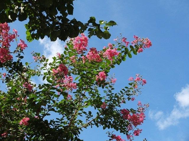 暑さに負けない、真夏の花!